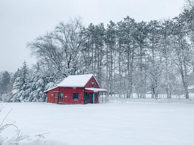 Red Winter Solitude